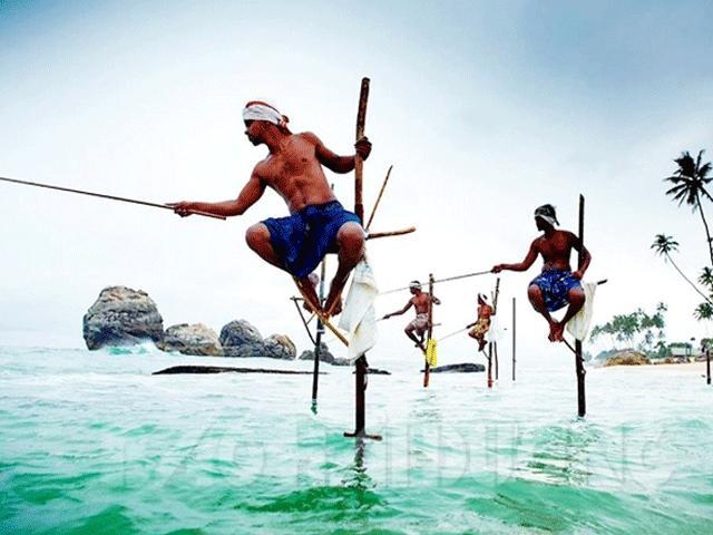 Nghệ thuật câu cá trên cọc của người dân Sri Lanka