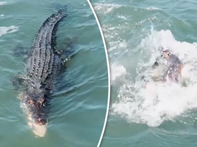 """Khiếp hồn cá sấu - cá mập """"tập kích"""" các VĐV khi đang thi đấu"""