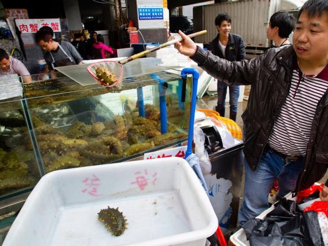 """Sinh vật biển có nguy cơ tuyệt diệt vì """"cơn khát"""" của người Trung Quốc"""