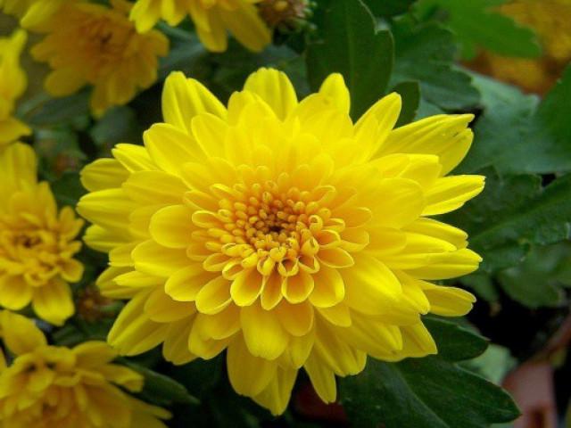 Những loại hoa được cắm nhiều ngày Tết nhưng lại chứa chất cực độc
