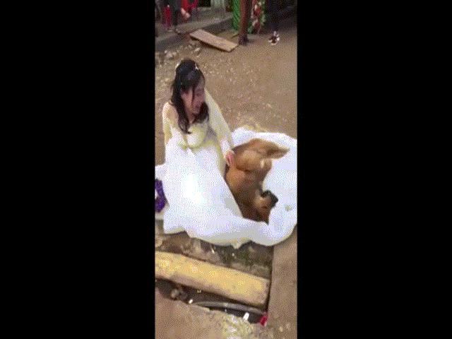 Clip: Phản ứng cực yêu của chó cưng khi cô chủ đi lấy chồng