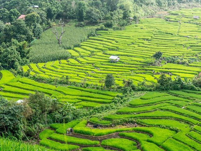 Những lý do tại sao bạn nên ghé thăm Chiang Mai