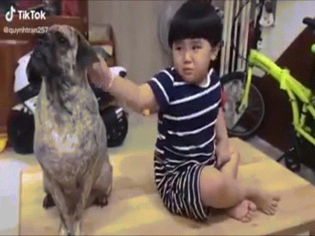 """Clip: Cậu bé và chú chó """"đốn tim"""" dân mạng vì quá dễ thương"""