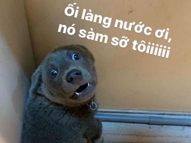 Chú chó Việt bỗng nhiên nổi tiếng khắp thế giới... và bật mí lý do đằng sau