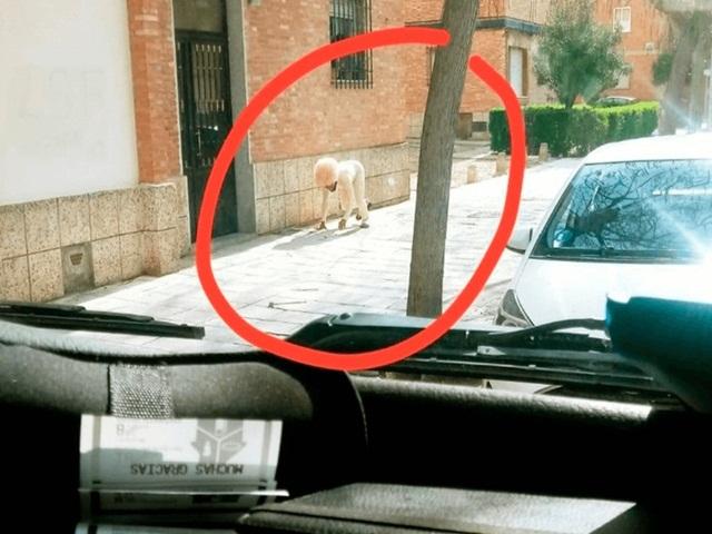 Quá chán khi phải ở nhà vì Covid-19, thanh niên giả làm chó để được ra ngoài