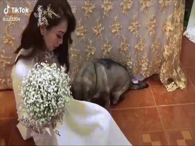 Clip: Cô chủ đi lấy chồng, chó cưng phản ứng khiến dân mạng tan chảy