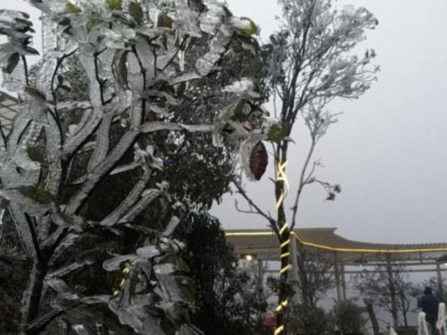 Tuyết trắng bao phủ nhiều nơi ở tỉnh Lào Cai