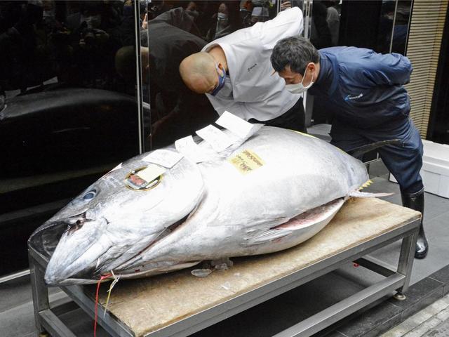 Lễ hội đấu giá triệu đô đón năm mới của Nhật Bản chìm trong đen tối vì Covid-19