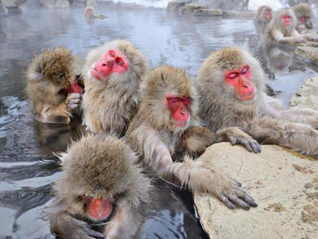 7 địa danh kỳ lạ nhất ở Nhật Bản, du khách đến rồi chỉ muốn quay lại lần nữa