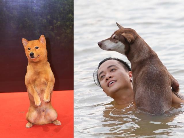 """Chó Shiba đóng Cậu Vàng bị """"tẩy chay"""", khán giả gọi tên những chú """"chó cỏ"""" này"""