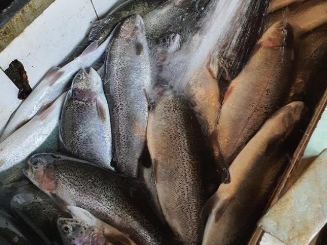 """Nóng tuần qua: Loại cá """"nhà giàu"""" rớt giá thảm hại, người nuôi mỏi mắt tìm đầu ra"""