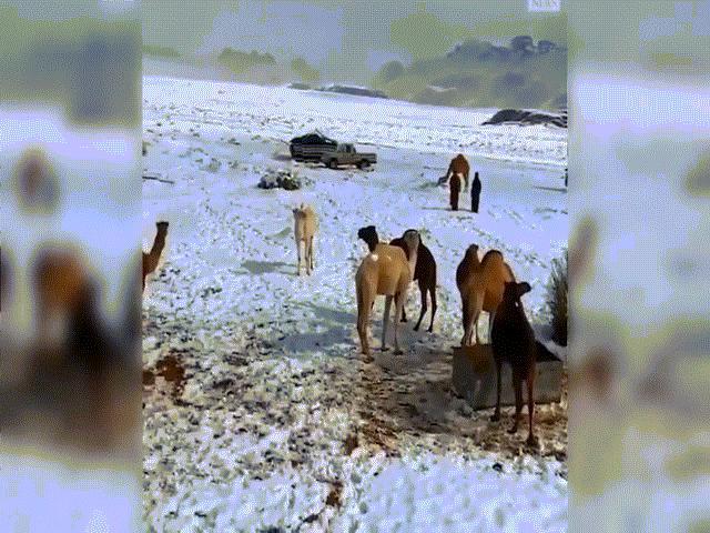 Video hiếm: Tuyết rơi phủ trắng góc sa mạc Sahara