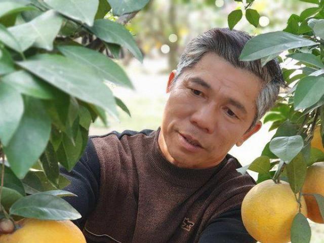 """Bí quyết trồng cam """"tiến vua"""" bán giá ngất ngưởng 130.000/quả"""