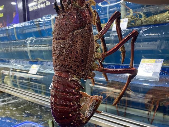 Nhà giàu Việt lùng mua tôm hùm đỏ về ăn Tết, cửa hàng hải sản bán 500 con/ngày