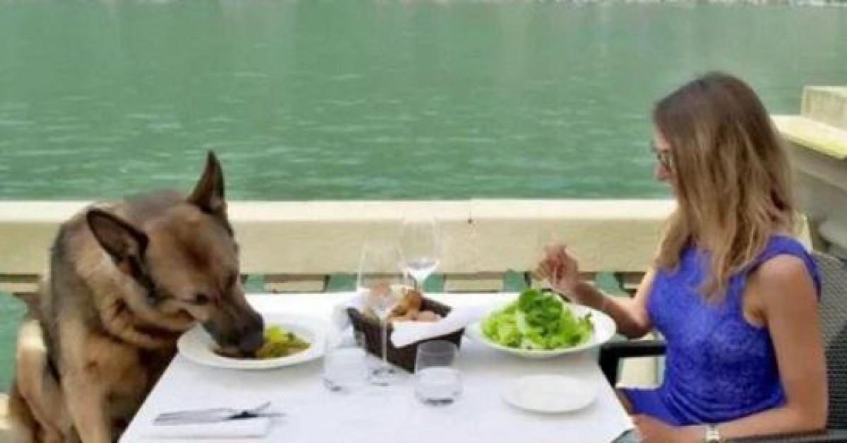Cận cảnh cuộc sống của chú chó giàu nhất thế giới: Lúc ăn phải có mỹ nữ tháp tùng