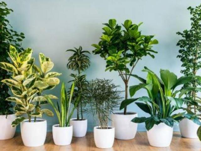 6 loại cây cảnh đẹp nhưng độc, người tiêu dùng nên lưu ý kẻo rước họa vào thân