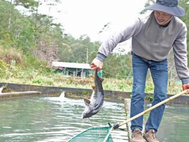 """Cá tầm Trung Quốc siêu rẻ quá nhiều, hạ """"đo ván"""" cá trong nước"""