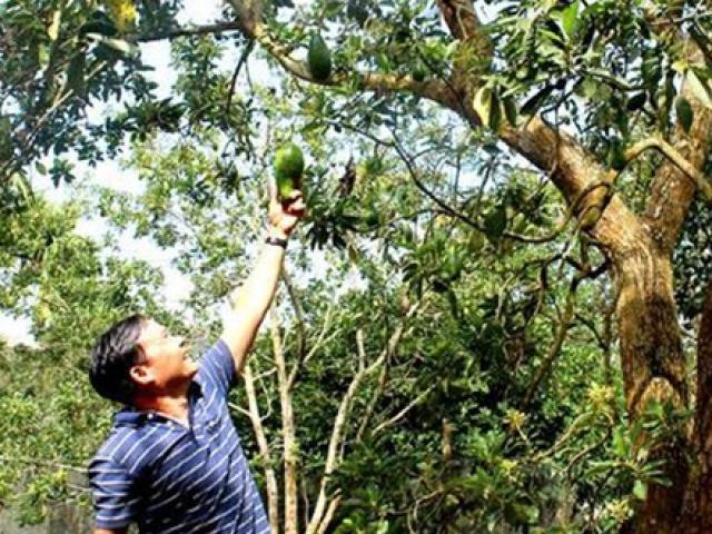 Sở hữu cây quý 40 năm, người đàn ông ở Việt Nam kiếm hàng trăm triệu
