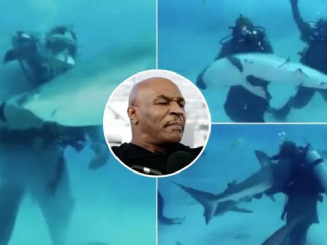 Mike Tyson xuống biển bơi với cá mập: Sư tử hung dữ bỗng như thỏ đế