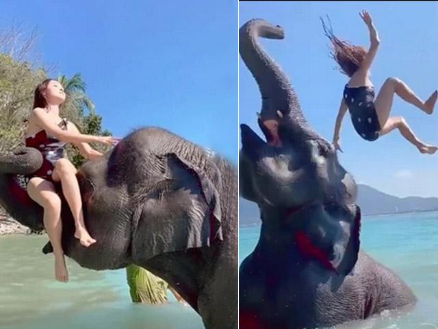 """Clip: Gái xinh chụp ảnh """"sống ảo"""" cùng voi nhận cái kết tê tái"""
