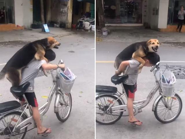 """Clip: Cậu bé chở chó cưng bằng xe đạp dạo phố """"đốn tim"""" dân mạng"""