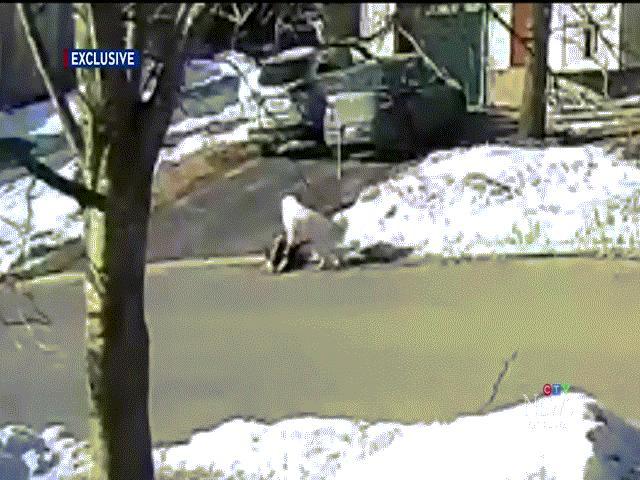 Chú chó đứng giữa đường chặn đầu xe tải, buộc tài xế dừng xe để cứu người