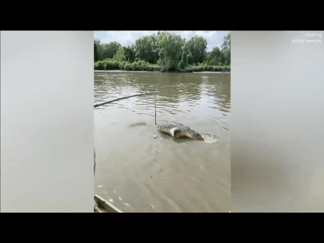 Video: Cá sấu dài 3m bất ngờ lãnh đòn khủng khiếp từ cá sấu khổng lồ 5,5m