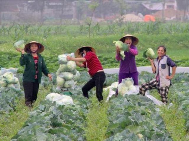 """Nông dân không còn rau để """"giải cứu"""", giá rau lại tăng gấp 4 lần"""
