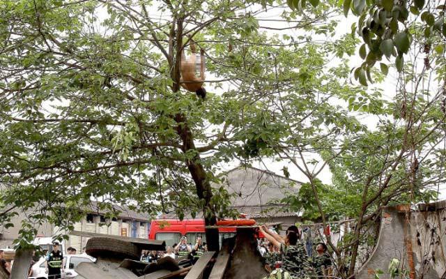 TQ: Thót tim cảnh người đàn ông khỏa thân đánh đu trên cây