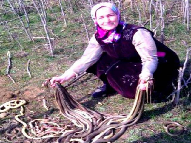 """Cụ bà 60 tuổi làm vườn """"hạ"""" một lúc 80 con rắn"""