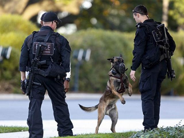 Biệt tài của 2 loại chó nghiệp vụ bảo vệ ông Obama ở VN