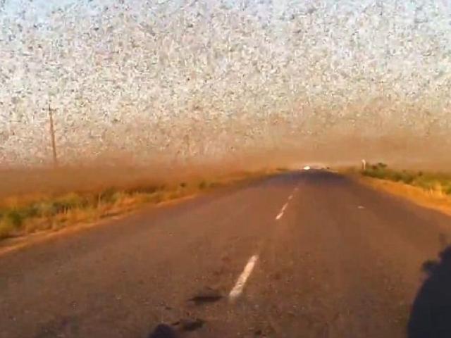 Video: Châu chấu phủ đen bầu trời ở Nga