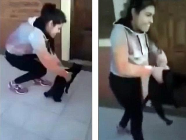 Video: Cô gái ném mèo từ tầng 4 xuống đất để…thí nghiệm
