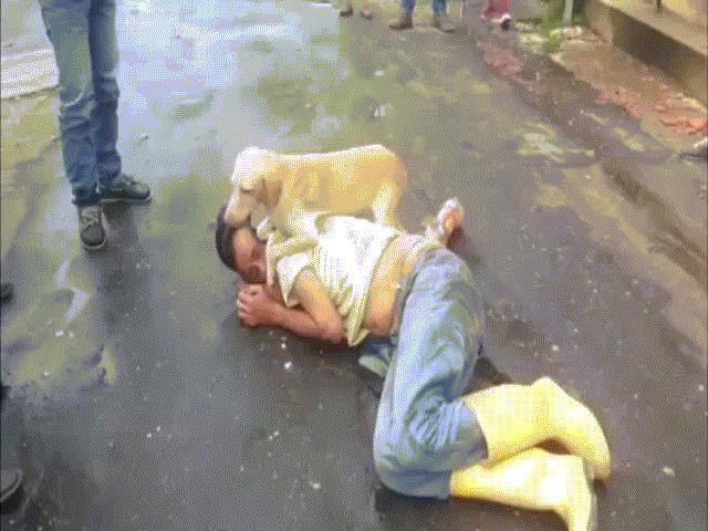 Clip: Chó cưng bảo vệ chủ say xỉn trên phố không rời