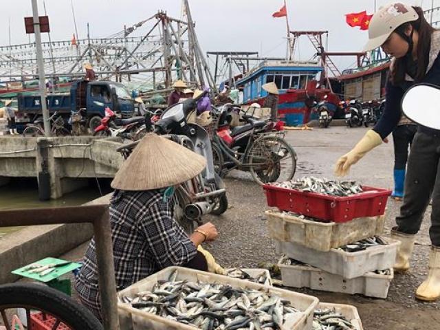 """Vụ cá """"khủng"""" bị xẻ bán ở Thanh Hóa: Không người mua cá sau khi cắt mổ"""