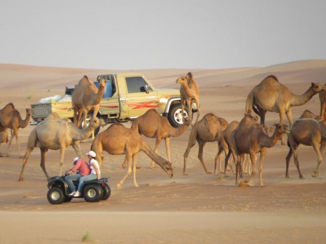 """Đến Dubai không chỉ để """"đốt tiền"""", du khách còn thích mê khi làm những điều này"""