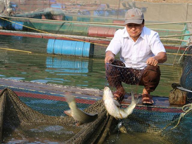 Từ núi xuồng sông Đà nuôi cá đặc sản mà khấm khá hẳn lên