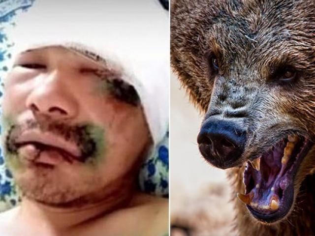 Nga: Bị gấu nâu 5 tạ tấn công, thợ săn nghĩ ra cách không ngờ để sống sót