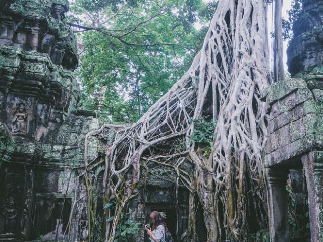 Rễ cây siêu to khổng lồ chăng như mạng nhện nuốt chửng ngôi đền cổ
