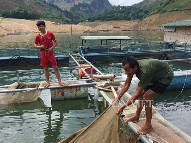Coi sông Đà là cánh đồng nước, nuôi toàn cá ngon, bán đắt hàng