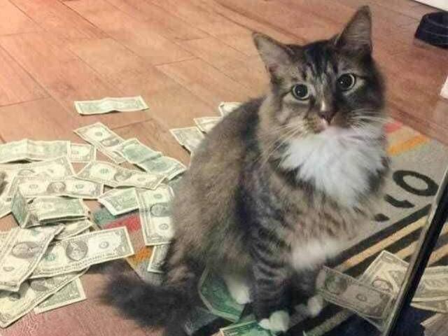 Câu chuyện chú mèo hằng ngày kiếm tiền về cho chủ