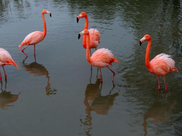 Hàng nghìn chim hồng hạc đổ về nhuộm hồng hồ nước ở Ấn Độ