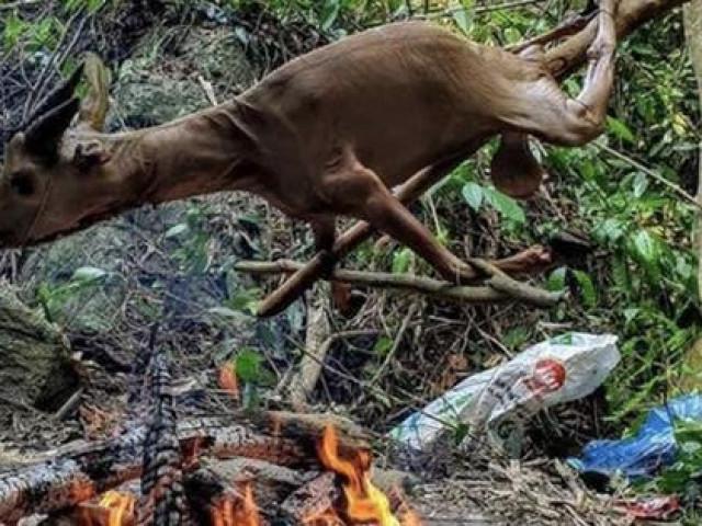 Tổng Biên tập tạp chí Sông Hương lên tiếng việc mình bị gán tội giết thịt động vật quý hiếm