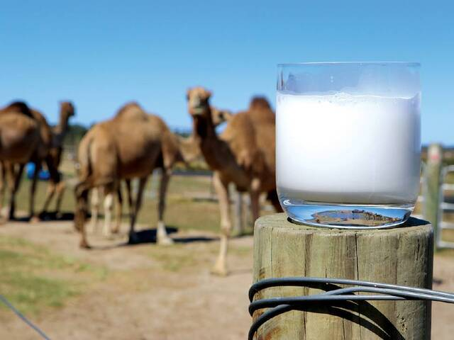 Chẳng mấy ai biết đến, loại sữa tên lạ hoắc lại có giá siêu đắt đỏ