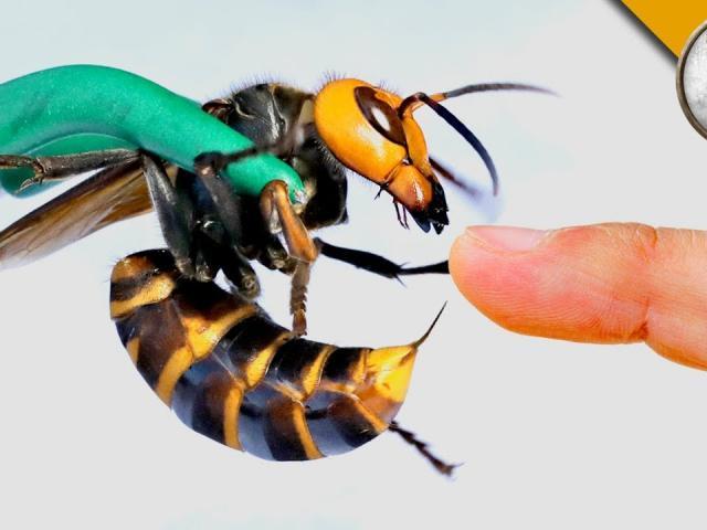 TBN: Phát hiện tổ ong bắp cày, người đàn ông tìm cách xử lý và kết cục thương tâm