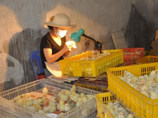 """Nghề lạ mỗi ngày kiếm cả triệu đồng nhưng luôn """"khát"""" người làm ở Hà Nội"""