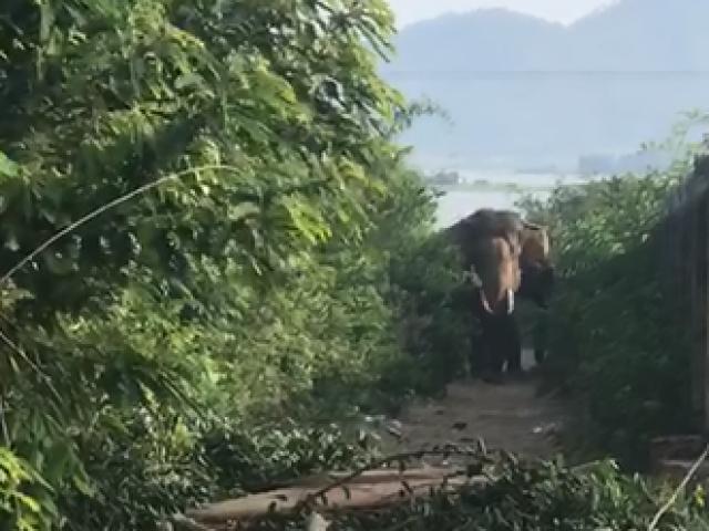 Thanh niên bị voi húc chết ở Đắk Lắk