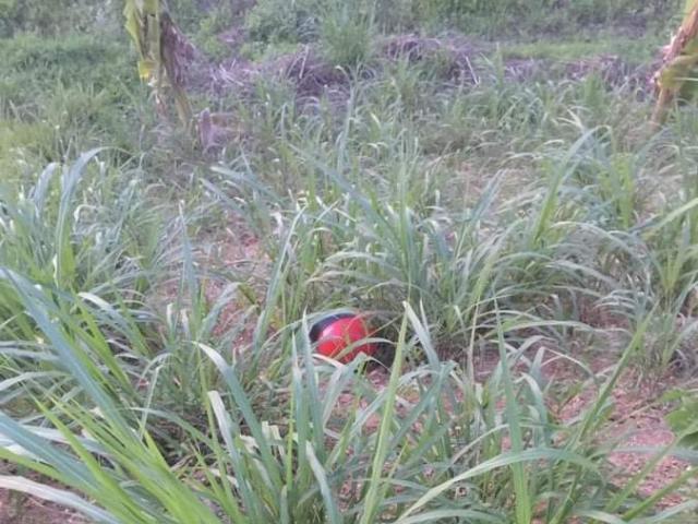Người đàn ông bị sát hại, giấu xác trong đám cỏ voi