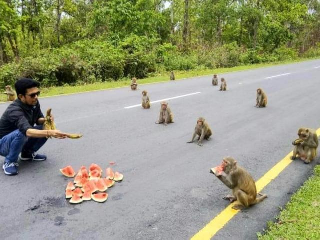 """Khỉ thực hiện """"giãn cách xã hội"""" không khác gì người trong dịch Covid-19"""
