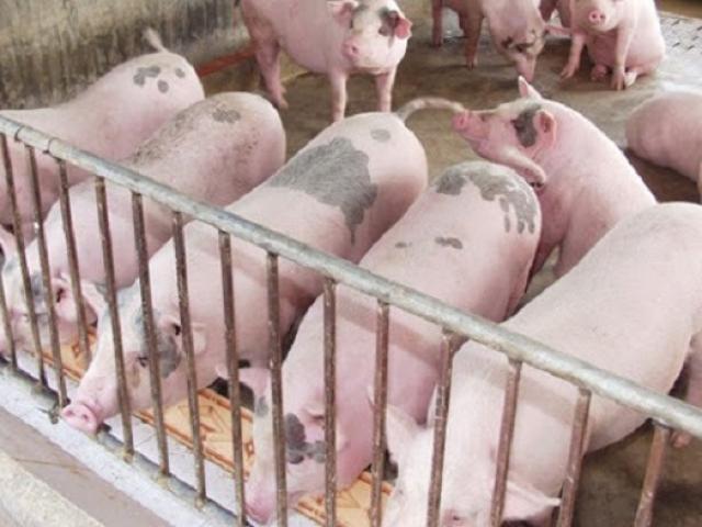Lợn hơi bất ngờ hạ nhiệt cả ba miền, chợ dân sinh vẫn vắng bóng người mua